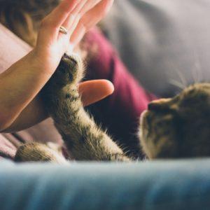 动物沟通课程